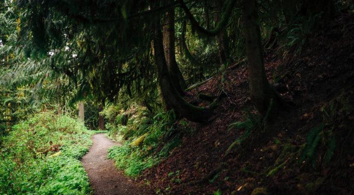 e-mtb proibite trail